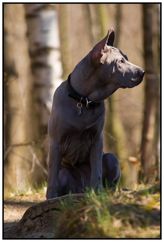 Hundeveranstaltung