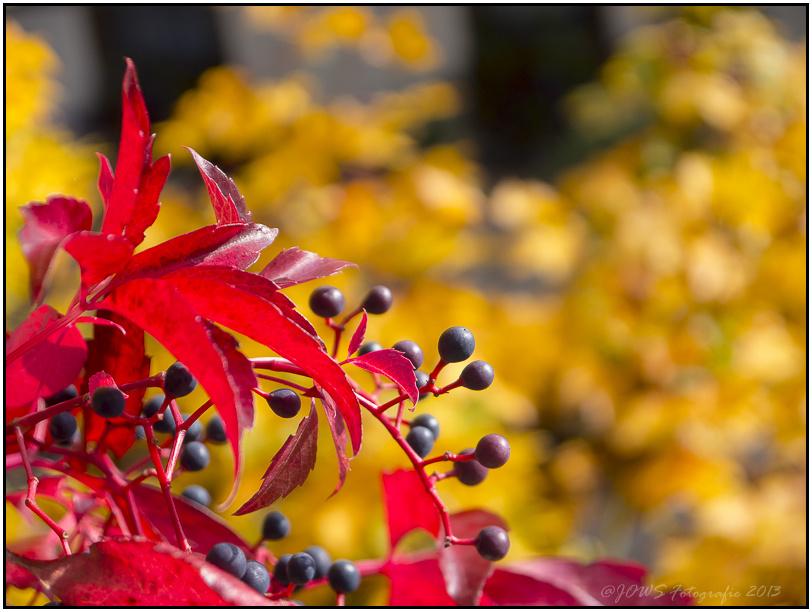 Natur und Landschaft im Oktober