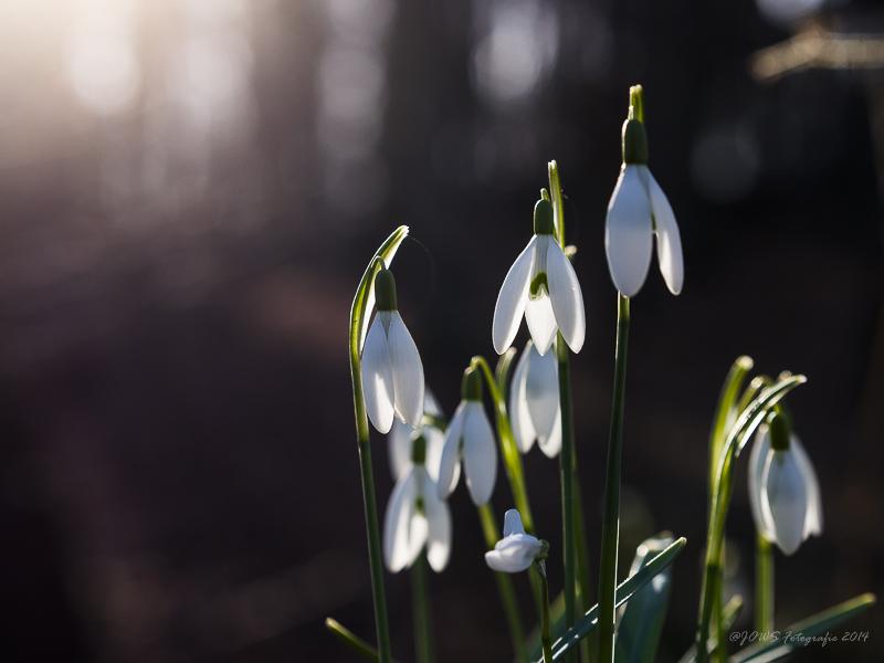 Erste Frühlingstage