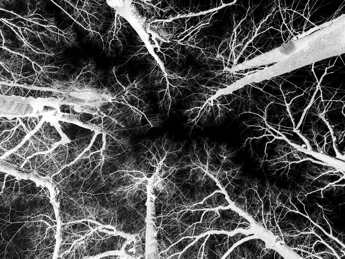 schwarzer Wald